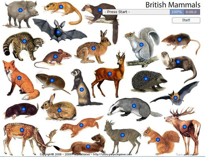 names of mammals Galle...
