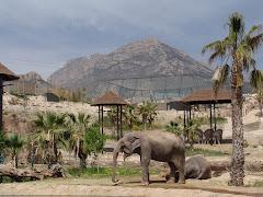 Terra Natura - elefantii