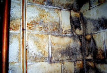Mold In Basement