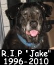 Jake RIP 1996 - 2010