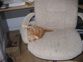 Our kitten Nala