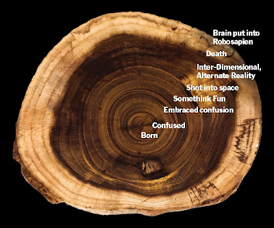 tree ring timeline