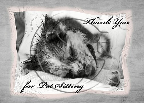 Thank You for Pet Sitting