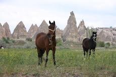 te paard...