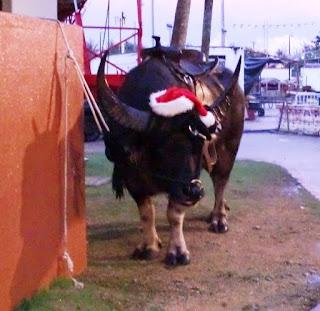 Christmas Caribao