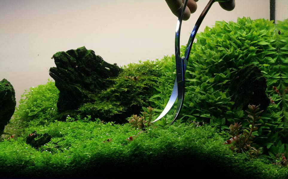 manage your freshwater aquarium tropical fishes and plants how to