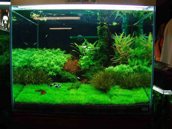 Tropical aquarium plants related keywords tropical for Exotic fish tanks