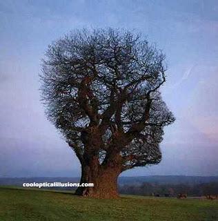 http://3.bp.blogspot.com/_MOnZG8JLO0w/Sk3EQN03l8I/AAAAAAAAALE/LrBpoy6kQBg/s320/pohon-bbentuk-kepala.jpg