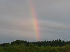 ... und für meine Tiere (auch die, die über die Regenbogenbrücke gegangen sind)...