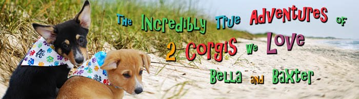 The Incredibly True Adventures of 2 Corgis We Love