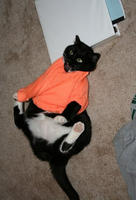 cat-does-not-like-sweater