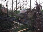 Stop felling trees