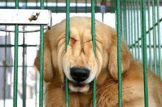 cão em fuga