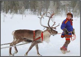 Uma das renas do Pai Natal