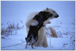 Amizade entre urso e huskie