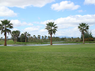 Palm trees in Salgaldos Golf Field Photos - Algarve