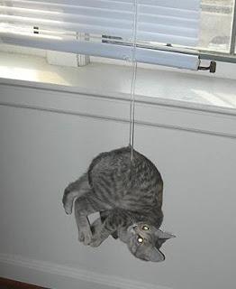 Gato preso por um fio