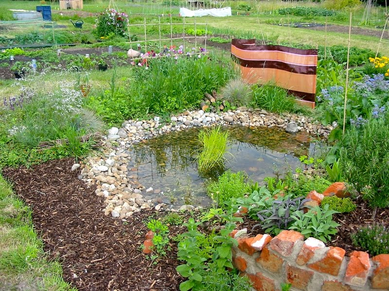 Heart and Soil - Spindlebrook Combe: A Permaculture Allotment - From ...