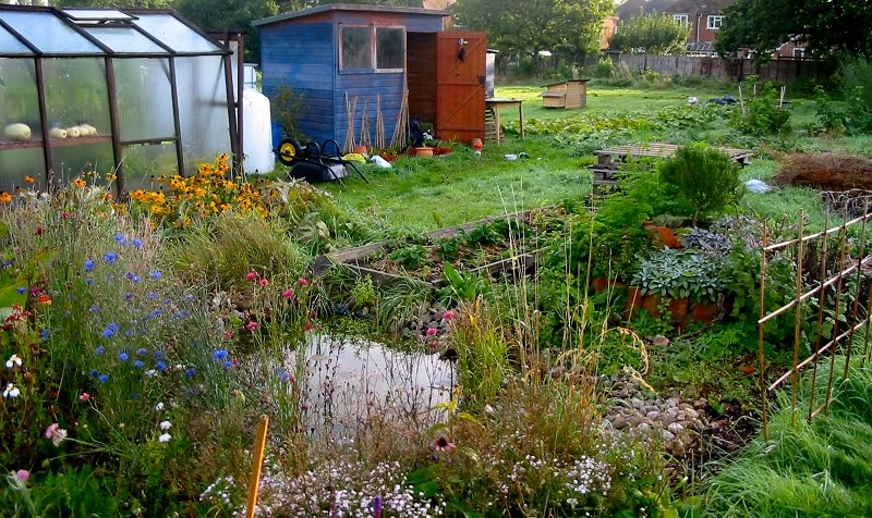 Polyculture on pinterest perennials companion planting for Small permaculture garden designs