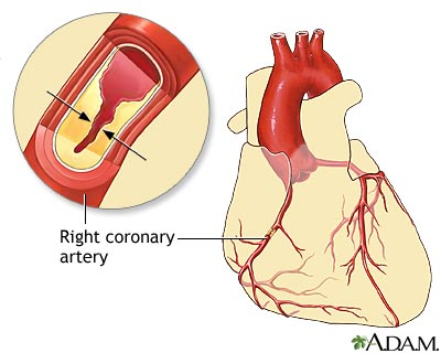 an analysis of circulatory system cardiac location and structures in human body Blood contained in the circulatory system is pumped by the heart around a heart location of the heart the human heart is structure of cardiac muscle.