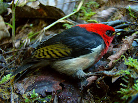 le petit colibri