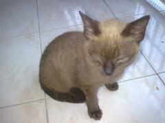 Bento - the cat
