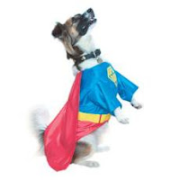 Pet Fancy Dress Costume