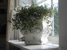 Blomma i köksfönstret