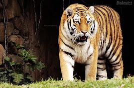 Meu Pantanal