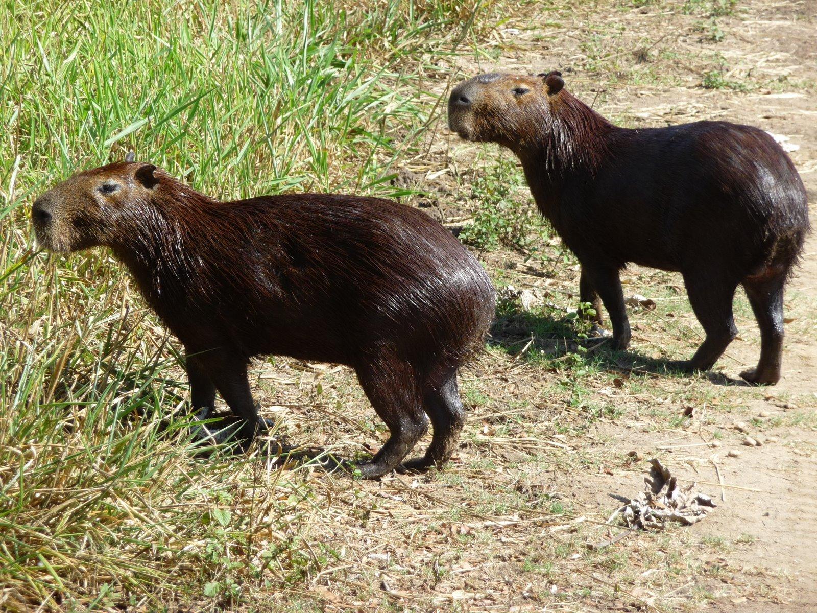 [1000505_Brasil_Pantanal-FazendaSanFrancisco_11-05-2009.JPG]