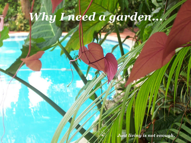 Why I need a garden...