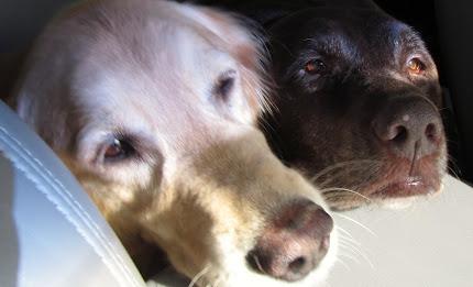 Maddy Jean & Bella