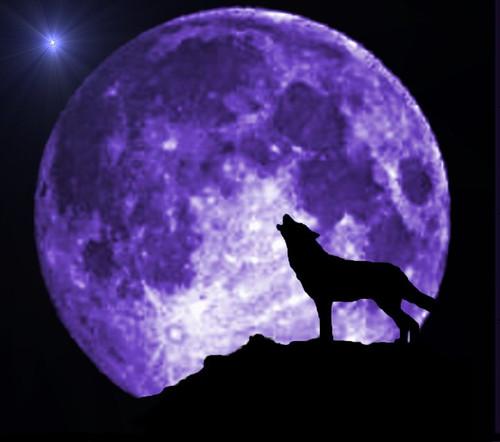 Fotos de lobos aullando a la luna - Imagui