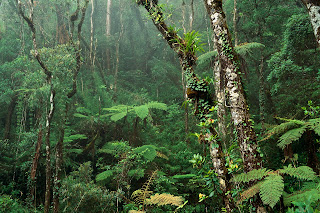 Montane Rainforest, Mount Kinabalu National Park, Borneo