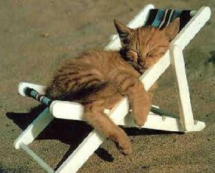 http://3.bp.blogspot.com/_Mc2vS25GfXM/SwTnSQ4rfoI/AAAAAAAAEVM/bSyPEJPUhio/s320/cat_chair_relax.jpg