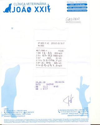Gaspar, Macho Adulto, FIV +, Margem Sul Gaspar+analises+29janeiro2010