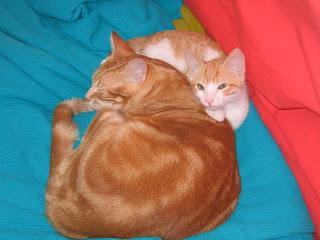 Star e Samantha > Duas gatinhas pequerruchas para adopção! IMG_1309