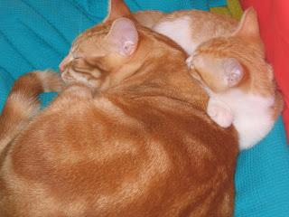 Star e Samantha > Duas gatinhas pequerruchas para adopção! IMG_1308