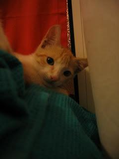 Star e Samantha > Duas gatinhas pequerruchas para adopção! IMG_1140