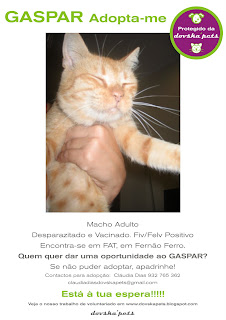 Gaspar, Macho Adulto, FIV +, Margem Sul Gaspar