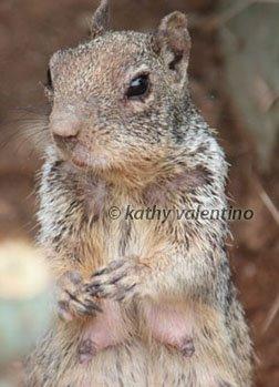 [squirrelmomwm.jpg]