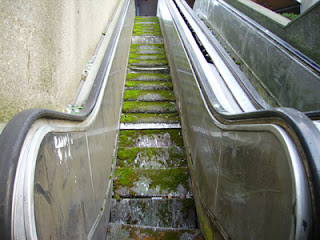 moss-bearing escalator