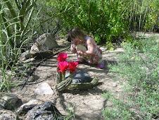 A Small Tucson Desert Garden