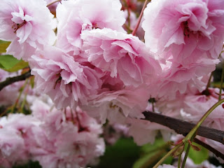 Close up of pink blossom