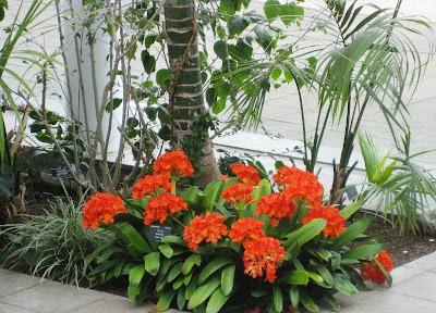 Vivid red flowers