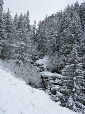 Snow scene: trees and a stream