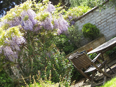 Wisteria and garden furniture