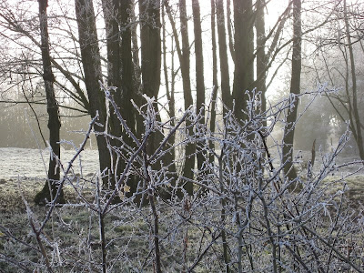 Branches and trees covered in frost