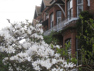 White flowers and Victorian houses