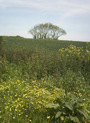 Wild flower meadow in front of a tree on the horizon